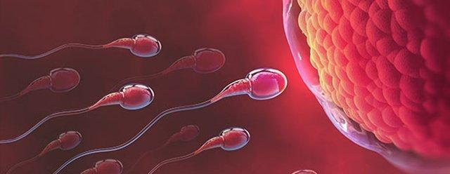 infertilidad-castellon-karisia-coelho-ginecologia-ginecologa