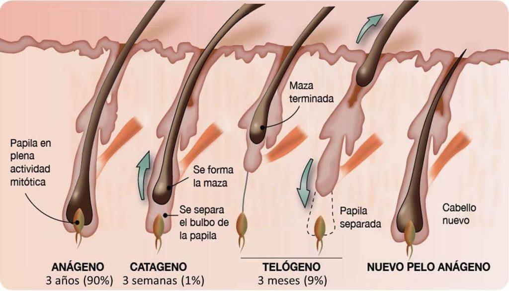 efluvio-telogeno-caida-cabello-pelo-otono-injerto-capilar-castellon